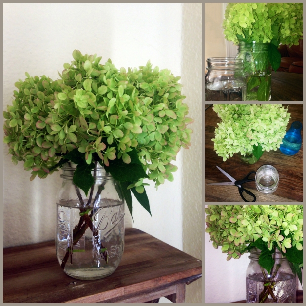 hydrangea collage without text
